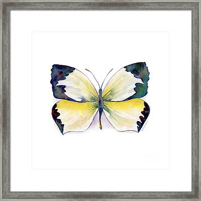 55 Mexican Yellow Butterfly Framed Print by Amy Kirkpatrick