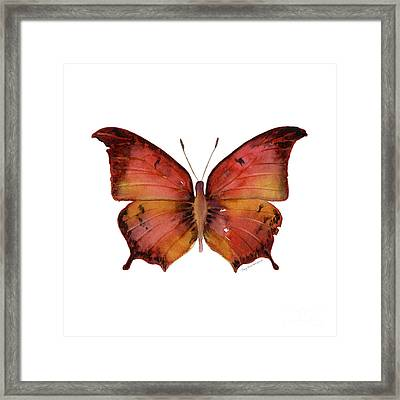 58 Andria Butterfly Framed Print by Amy Kirkpatrick