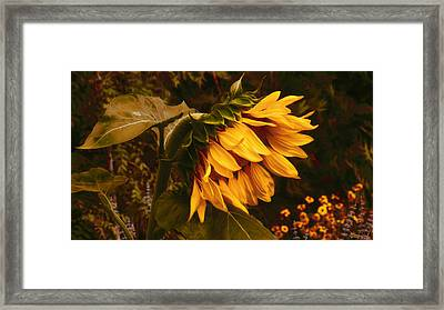 5am Wake Up Call Framed Print