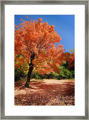 A Blanket Of Fall Colors Framed Print