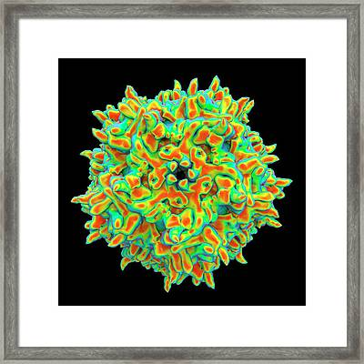 Adeno-associated Virus Framed Print by Alfred Pasieka