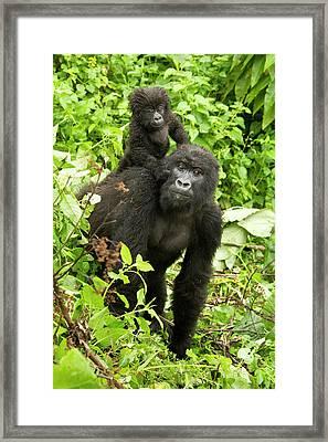 Africa, Rwanda, Volcanoes National Framed Print