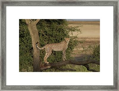 Africa, Tanzania, Serengeti Framed Print by Charles Sleicher