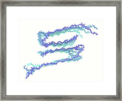 Alzheimer's Beta-amyloid Fibrils Framed Print