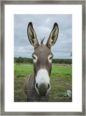Animal Personalities Friendly Quirky Donkey Face Close Up Framed Print by Jani Bryson