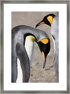 Antarctica, South Georgia, Salisbury Framed Print by Jaynes Gallery
