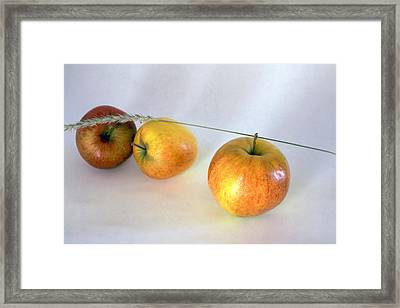 Apples Framed Print by IB Photo