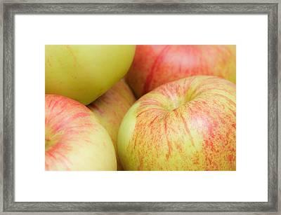 Apples Framed Print by Tom Gowanlock