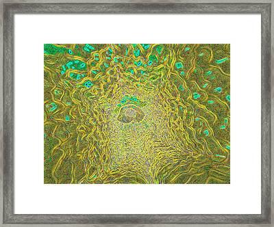 Aristolochia Sp. Flower Framed Print by K H Fung