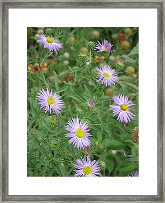 6 Asters Left Framed Print