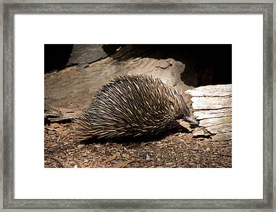 Australia, Adelaide Framed Print by Cindy Miller Hopkins