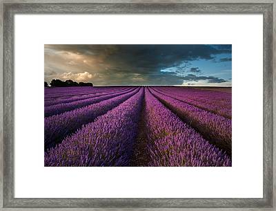 Beautiful Lavender Field Landscape With Dramatic Sky Framed Print by Matthew Gibson
