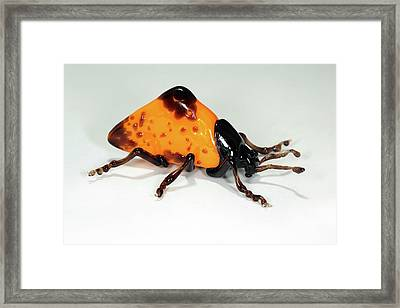 Beetle Framed Print by Tomasz Litwin