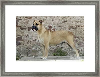 Canary Dog Framed Print by Jean-Michel Labat