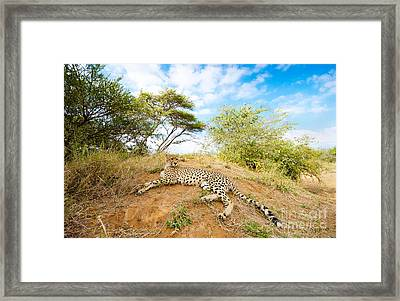 Cheetah - South Africa Framed Print by Birdimages Photography