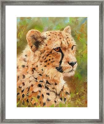 Cheetah Framed Print by David Stribbling