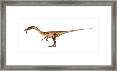 Coelophysis Dinosaur Model Framed Print by Natural History Museum, London/science Photo Library