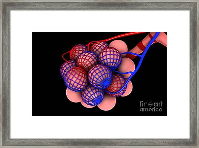 Conceptual Image Of Alveoli Framed Print by Stocktrek Images