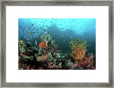 Coral Reef Framed Print by Ethan Daniels