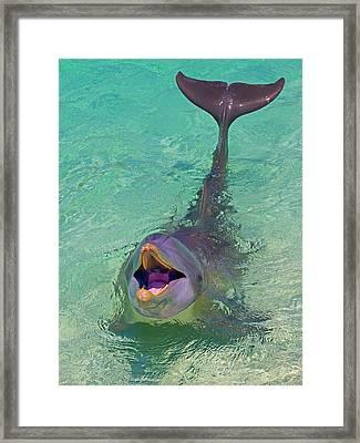 Dolphin In The Ocean, Roatan Island Framed Print by Keren Su
