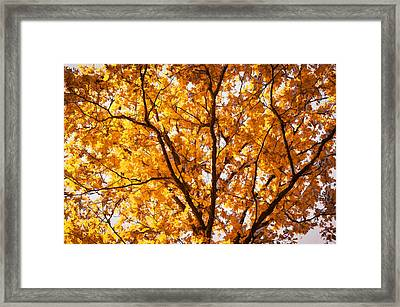 Fall Foliage Great Smoky Mountains Painted    Framed Print