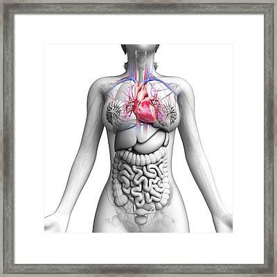 Female Anatomy Framed Print by Pixologicstudio