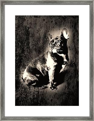 French Bulldog Framed Print by Falko Follert