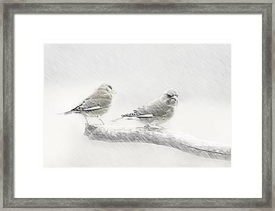 Greenfinch  Framed Print by Heike Hultsch
