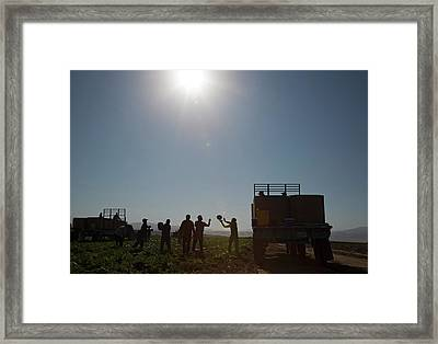 Harvesting Watermelons Framed Print