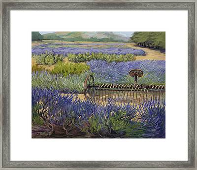 Edge Of The Lavender Field Framed Print by Jane Thorpe
