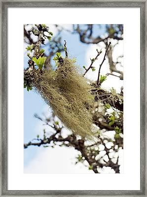 Lichen Framed Print by David Aubrey