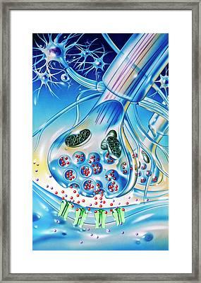 Nerve Synapse Framed Print by John Bavosi