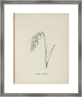Nonsense Botany By Edward Lear Framed Print by British Library
