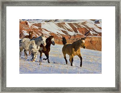 North America, Usa, Wyoming, Shell, Big Framed Print