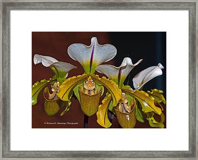 Paphiopedilum Orchid Framed Print