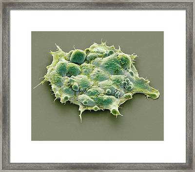 Pluripotent Stem Cells Framed Print