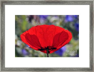 Framed Print featuring the photograph Poppy Flower by George Atsametakis