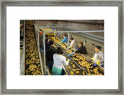 Potato Processing Plant Framed Print by Jim West