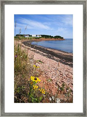 Prince Edward Island Coastline Framed Print by Elena Elisseeva