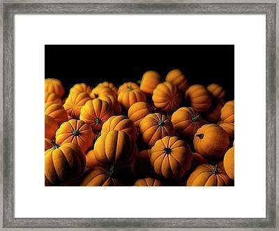 Pumpkins Framed Print by Sebastian Kaulitzki