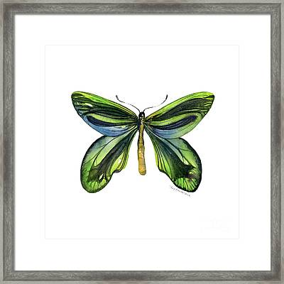 6 Queen Alexandra Butterfly Framed Print by Amy Kirkpatrick