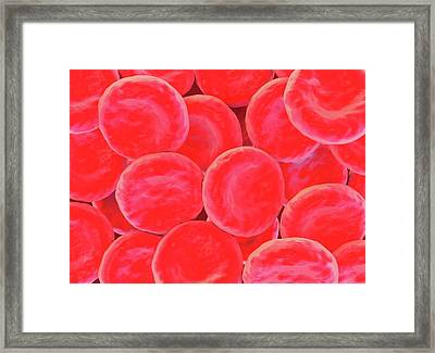 Red Blood Cells Framed Print by Science Artwork