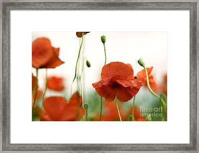 Red Poppy Flowers Framed Print by Nailia Schwarz