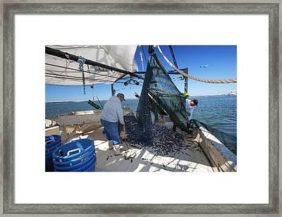 Shrimp Fishing Framed Print