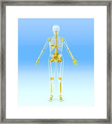 Skeleton And Ligaments, Artwork Framed Print