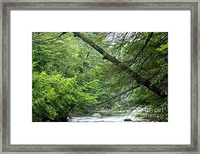 Spring Along Cranberry River Framed Print by Thomas R Fletcher