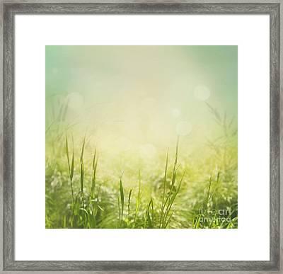 Spring Background Framed Print by Mythja  Photography