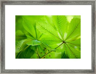 Spring Green Framed Print by Nailia Schwarz