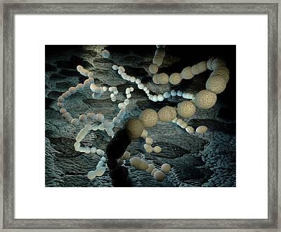 Streptococcus Pneumoniae Artwork Framed Print