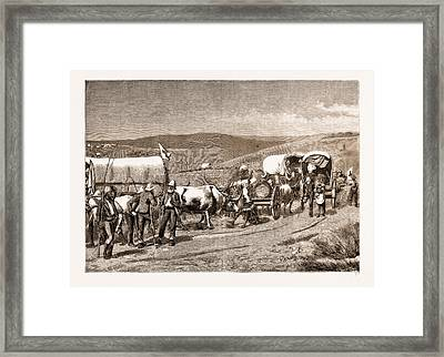 The Revolt In The Transvaal, South Africa Framed Print